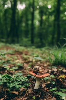 Wild mushroom in the forest, natural food, summer harvest.