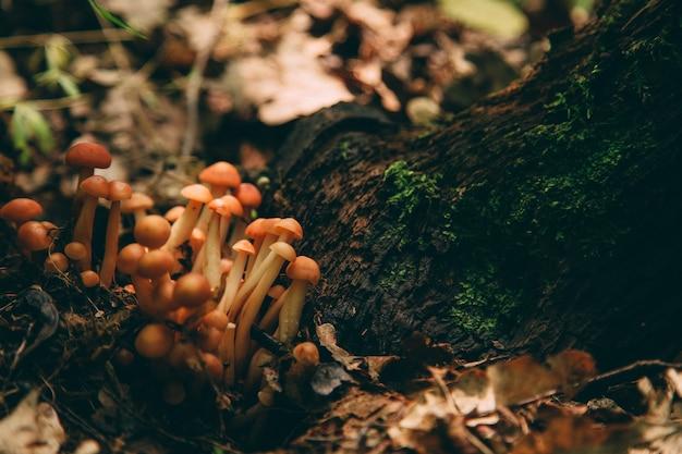 Дикий гриб в лесу, натуральная пища, летний урожай.