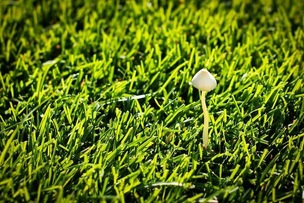 Лесной гриб на лужайке