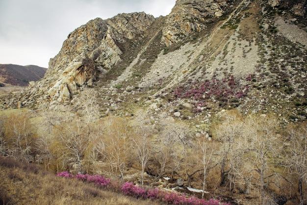 春先のシベリアの野生の自然。曇り空を背景にしたロッキー山脈、急流のほとりにある木々や低木。