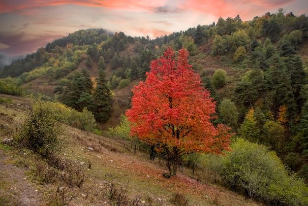 Дикие груши, покрытые красной листвой. красивый пейзаж, удивительное небо.