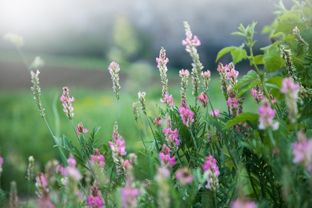 필드에 와일드 핑크 꽃