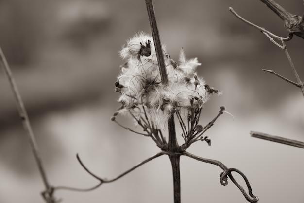 Дикое растение с шипами. крупный план. сушеное колючее растение. макро фото. шероховатая текстура поверхности растения. сушеный шип. сухой стебель растения. мелкие детали крупным планом