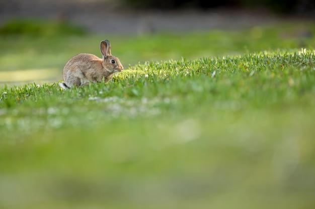 Дикий кролик в лесу ищет самую нежную траву