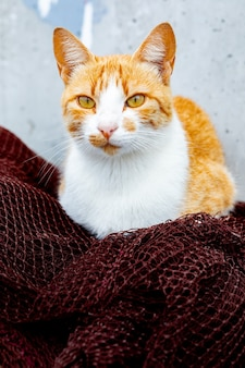Дикий рыжий кот отдыхает на рыболовных сетях