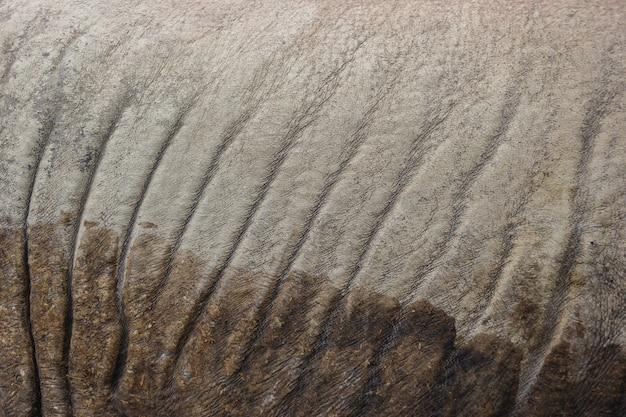 A wild rhinoceros skin surface texture background.