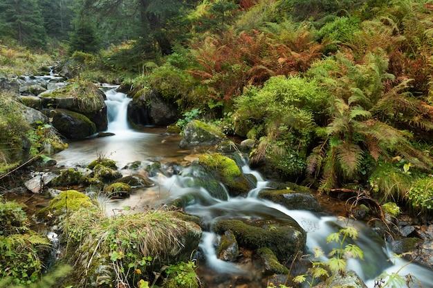 Дикая река, протекающая в нетронутой зеленой природе осенью