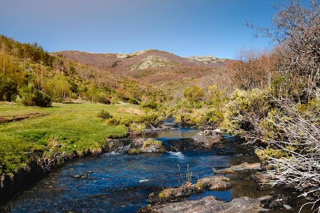 산 풍경에 야생 강