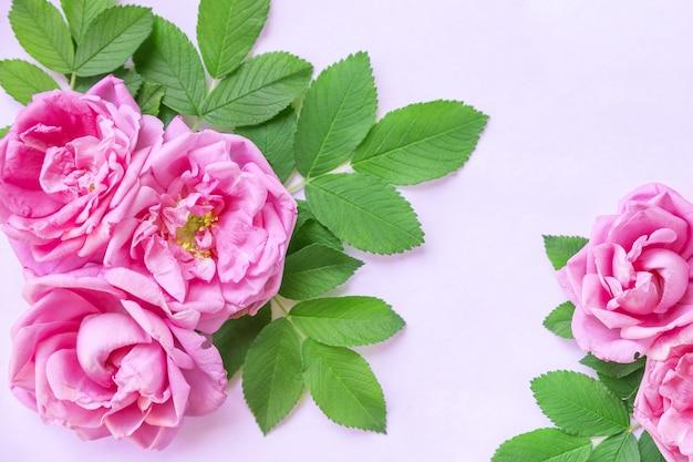 白で隔離される野生のバラの花コーナーアレンジメント。上面図。フラットレイ