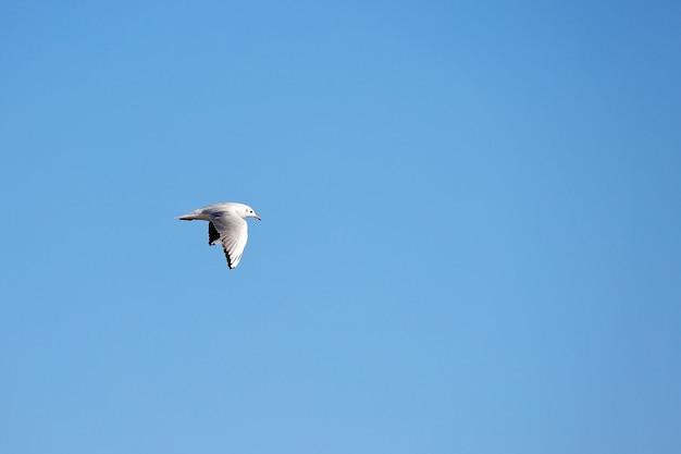 Дикая чайка на фоне естественного голубого неба.