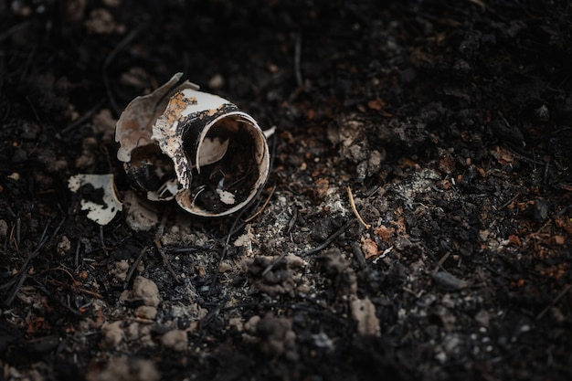 Wild snail shell charred ashes after wildfire.global warming, protect forests, conserve environment concept.
