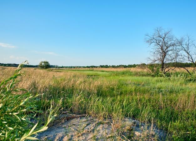 Wild steppe on a summer day, ukraine