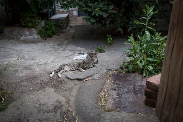 Дикие бездомные кошки и собаки на улицах города. тбилиси, грузия. фото высокого качества