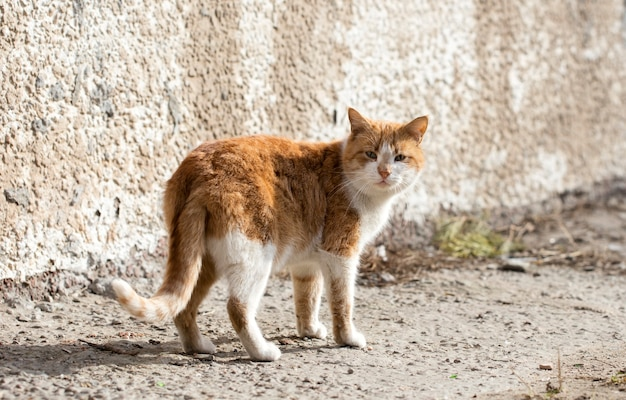 야생 거리 고양이