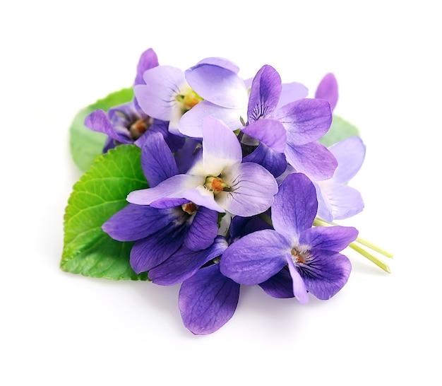 Крупный план одичалых фиолетовых цветков на белых задних.