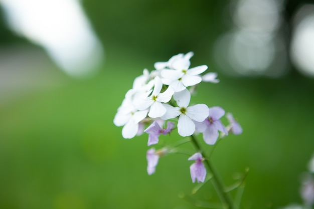 필드에 야생 흰 꽃