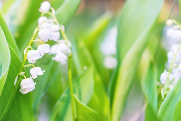 スズランの野生の白い花のマクロ撮影