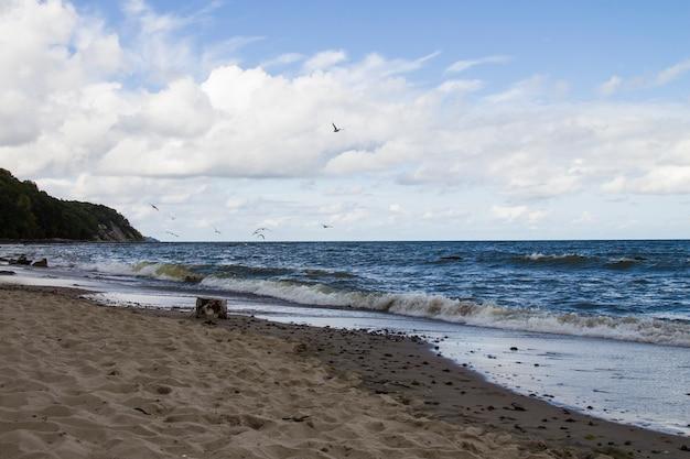 野生の白いカモメ海の海鳥が海の上を飛んでいる翼は生命の自由を示しています白青のトーン自然海景風景背景