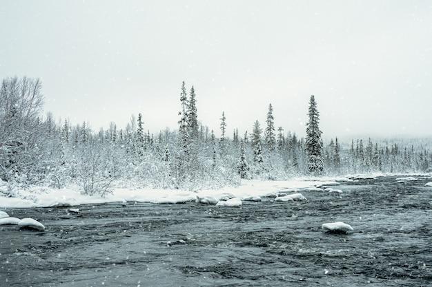 Дикий зимний снежный северный лес с рекой в полярный день. нетронутая чистая природа. карелия.