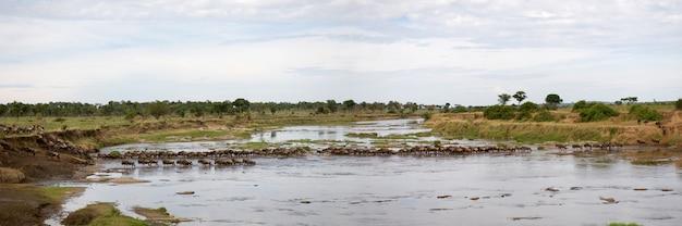 セレンゲティ、タンザニア、アフリカの川でヌー