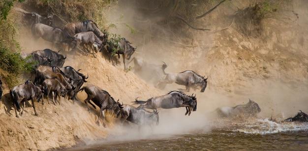 マラ川に飛び込むヌー