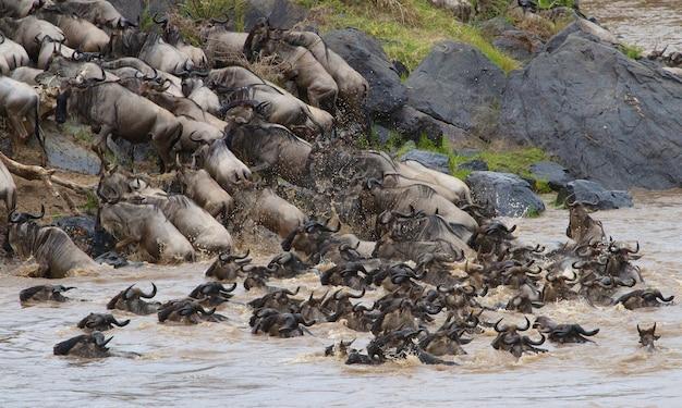 セレンゲティ国立公園でのヌーの移動