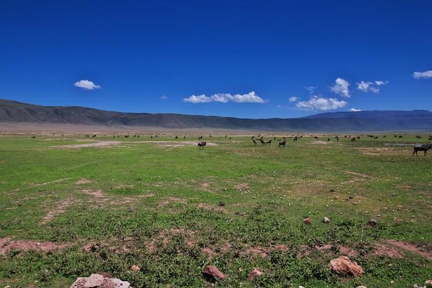 Wildebeest on safari in kenia and tanzania, africa