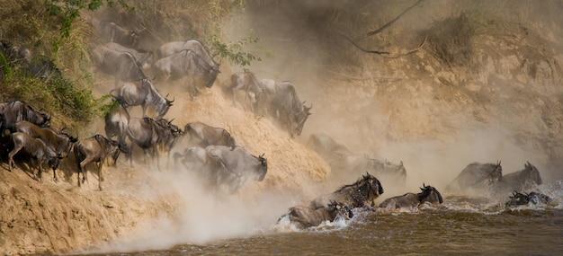 ヌーがマラ川を渡っています