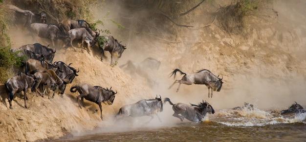 ヌーがマラ川に向かって走っています