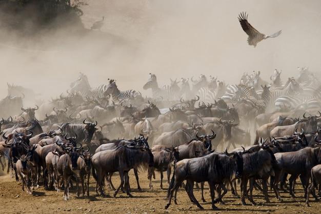 ヌーはサバンナに立っています。大移動。ケニア。タンザニア。マサイマラ国立公園。
