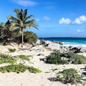 Пустынный карибский пляж летом в мексике