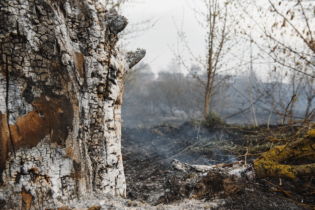 Wildfire, forest fire, burning forest, field fire,