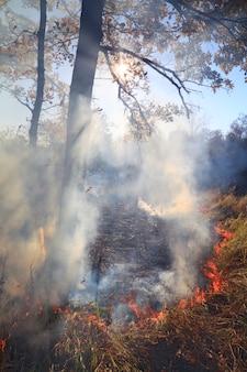 Лесной пожар в осеннем лесу