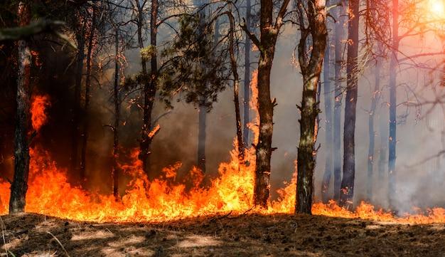 Лесной пожар в лесу