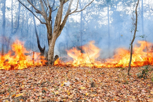 Wildfire in tropical forest ,thailand