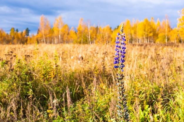 Wildflower autumn meadow, flower on fall field.