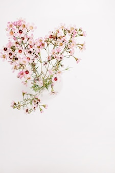 Wildflower branch on white background. top view, flat lay