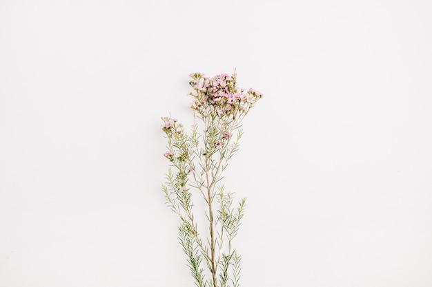 白い背景の上の野生の花の枝。フラットレイ、トップビュー