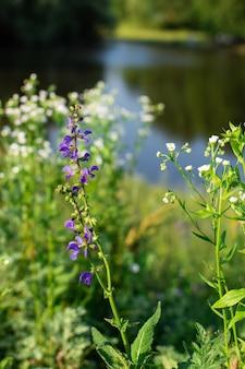 湖のほとりの村の牧草地での野花のクローズアップ、夏のアウトドアレクリエーション