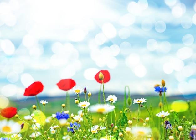 푸른 하늘을 배경으로 한 야생화 밭