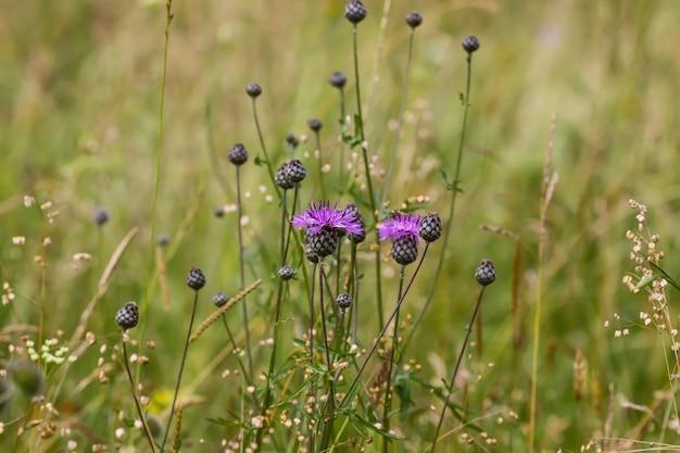 Полевые цветы на летнем поле.
