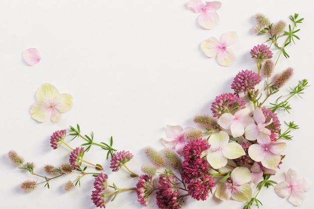 Полевые цветы на фоне белой бумаги