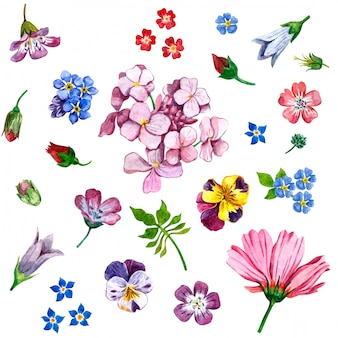 Wildflowers painted in watercolor on white