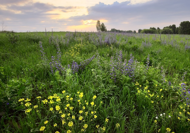 Wildflowers in the thick grass in the field in the morning under a cloudy sky