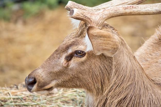 Wildlife of deer in nature.