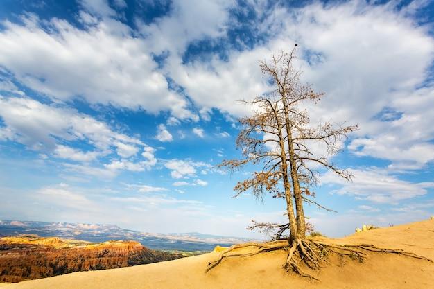 乾燥した木と野生動物の自然の風景。
