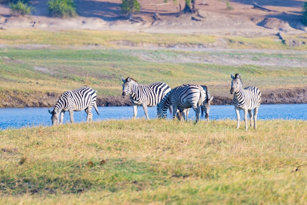 Wildlife safari in the african national parks.