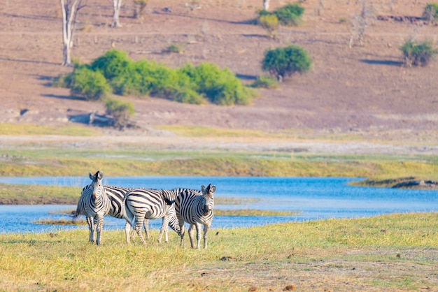 Wildlife safari in the african national parks