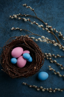 Willow branch and tulip, easter eggs, decorative gift box and nest on blue cloth background
