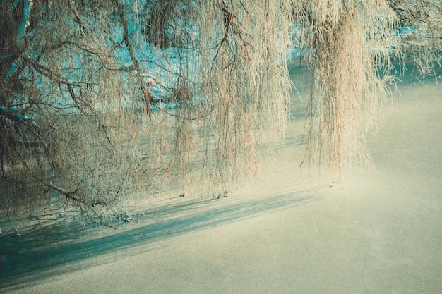 柳の枝が凍った川の氷の上にぶら下がって影を落とす